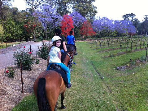 Pony rides Port Macquarie