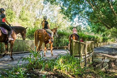Horse riding in Port Macquarie