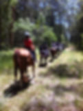 Trail Rides Port Macquarie