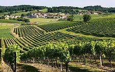Vignes_Nouère.jpg