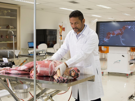 Csanmek cria joint-venture com Syndaver para comercializar modelos de treinamento cirúrgico