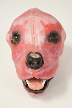 Canine Muscled Head2