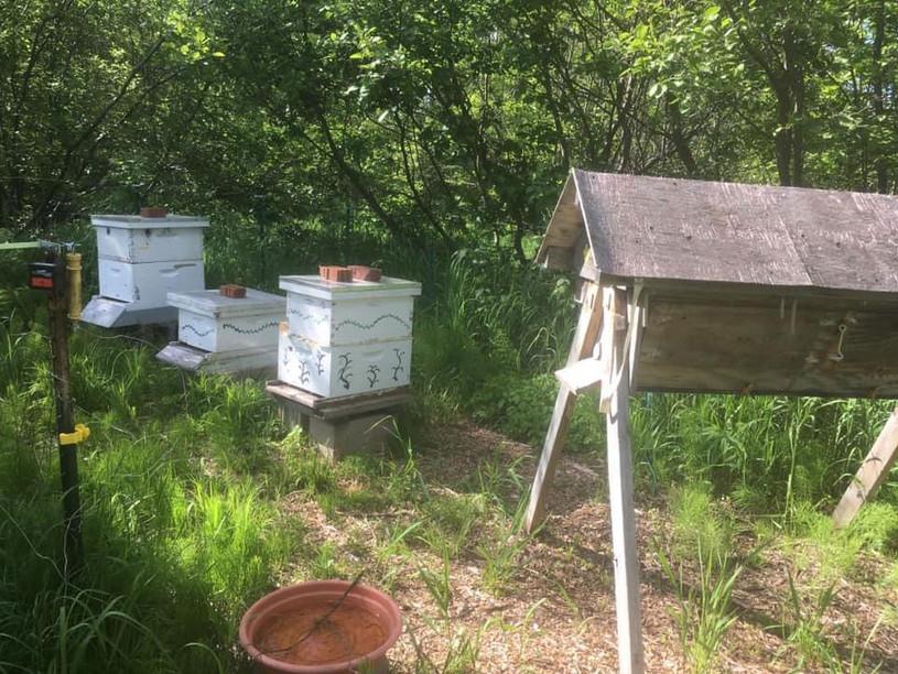 Honeybee Yard