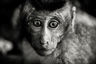 Planet apes