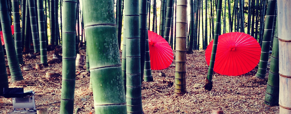 bamboo_forest.jpg