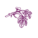 figtreebranch.purple.png
