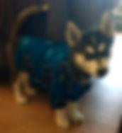 Paw-loha Shirt, Size Small Blue Hibiscus