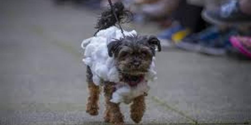 Trashion Fashion Dogs on the Catwalk