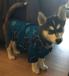 Paw-loha Shirt