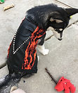 Devil Dawg Vest, Size Medium