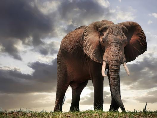 Die wonderwêreld van die Krugerwildtuin