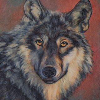 Grey Wolf at Sunset