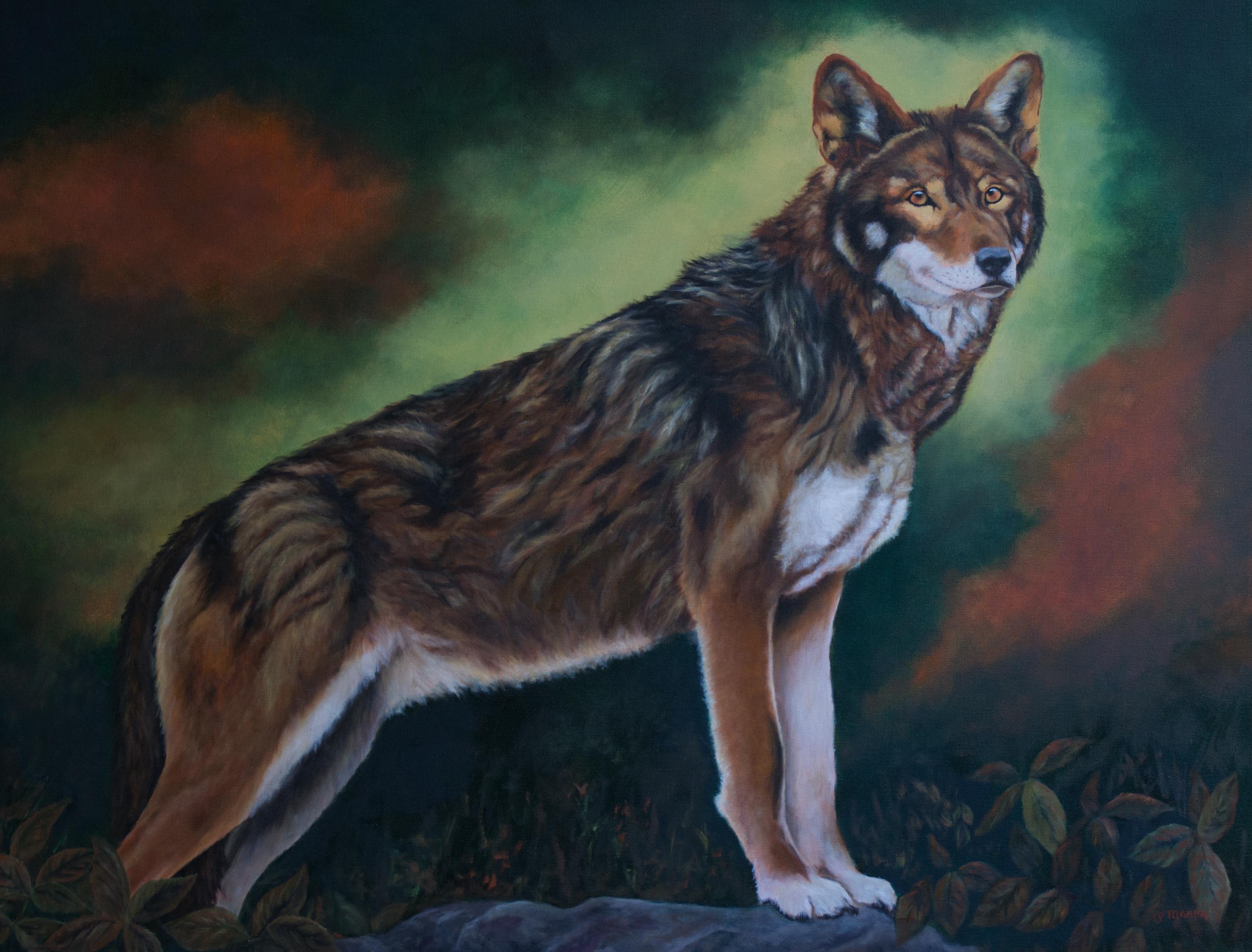 Wa'Ya Red Wolf 30 x 40