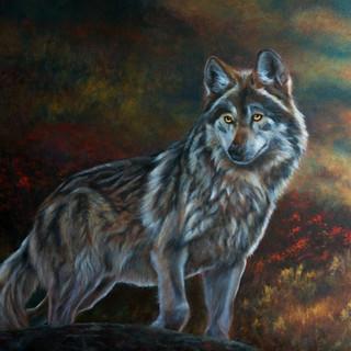 Alert Gray Wolf