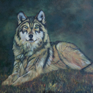 Wolf at Rest