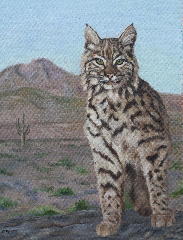 Desert Bobcat