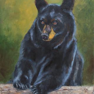 Sweet Black Bear