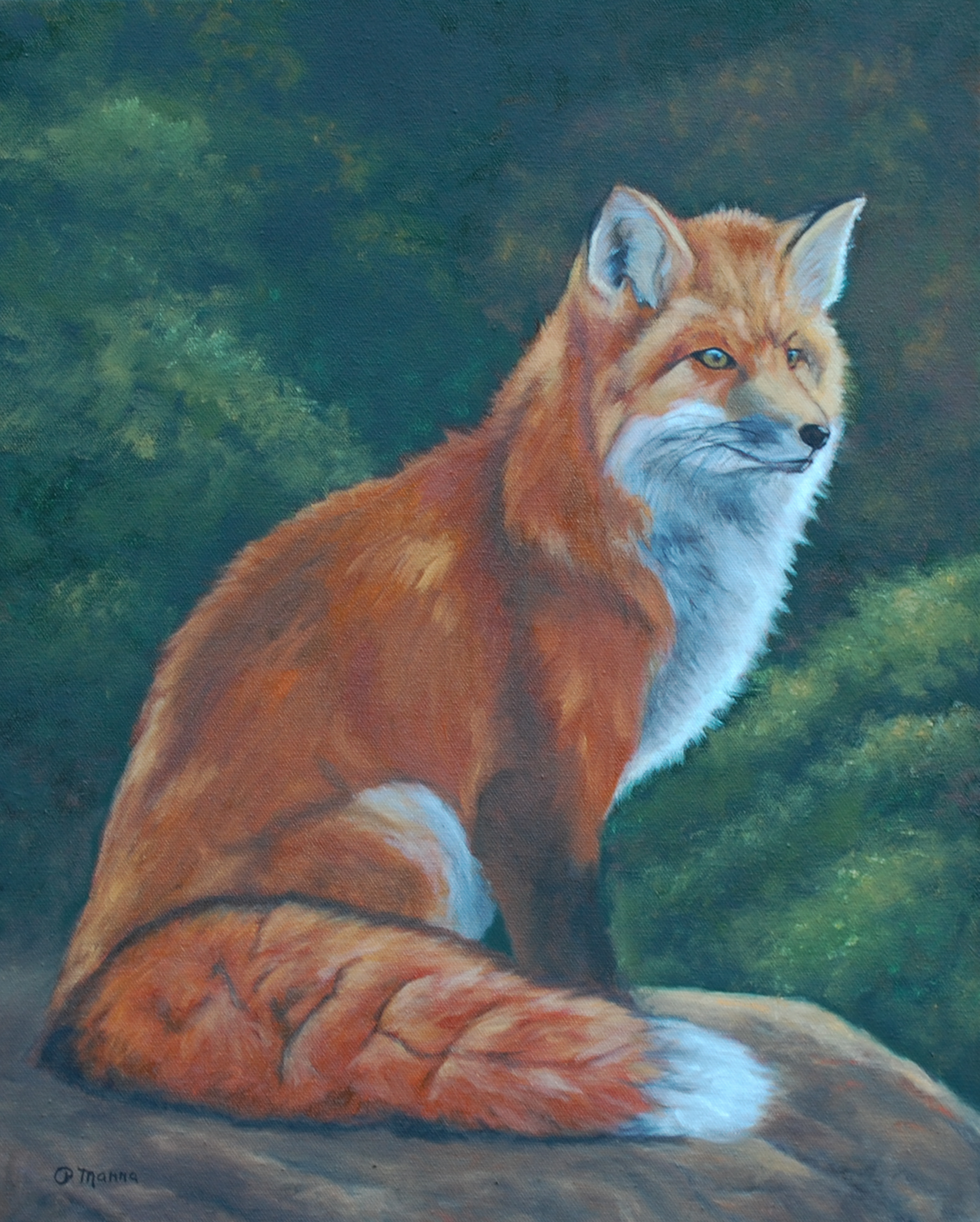 Red Fox on a Rock