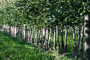 A_klein200918_Afterwork Bauernhof_Erntez