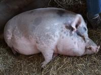 kleinAfterWork am Bauernhof_Hautnahes Tiererlebnis & Superfood (c) ÖKL (41).jpg