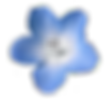 blue-flowers-png-tumblr-5.png