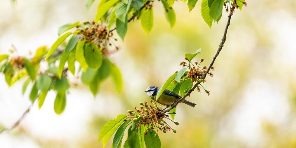 Atelier : mangeoires et nichoirs pour oiseaux (en ligne)