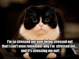 STRESS: The Villain of Your Goals