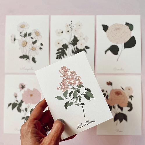 Postales Botánicas - rosas