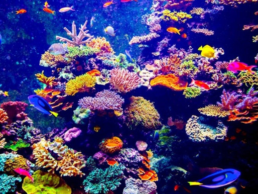 Corals- the belt of jewels around the planet's core