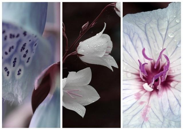 Triptychon_farblich_geändert.jpg