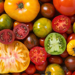 tomato season is upon us