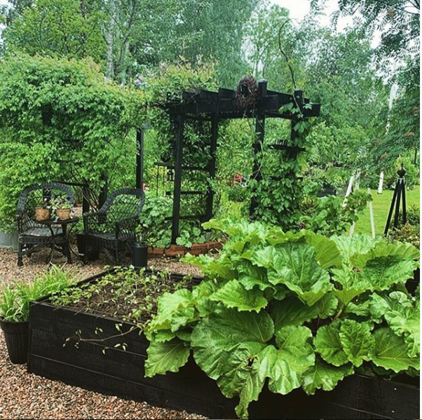 Vegetable Garden Consultation