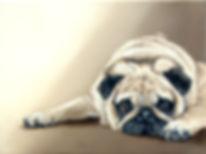 pug for prints final light-001.jpg