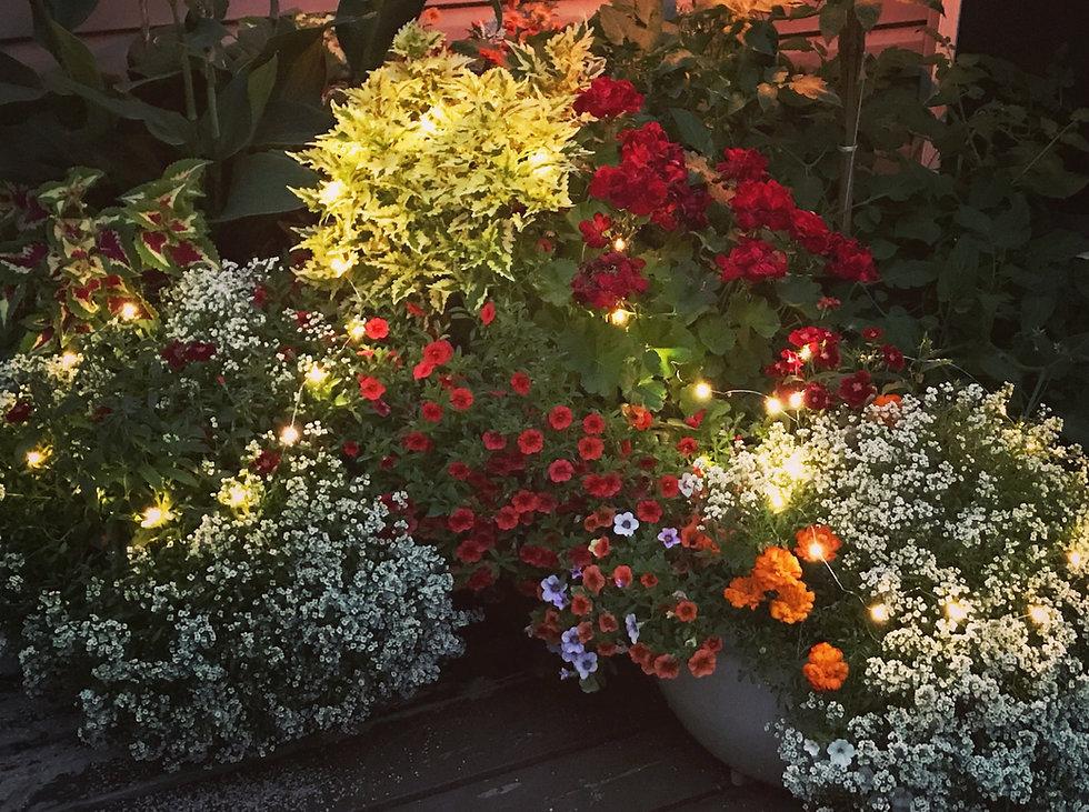 fairy lights in summer pots_edited.jpg