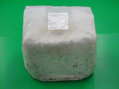 オオヒラタケ菌床ブロック(3500cc)