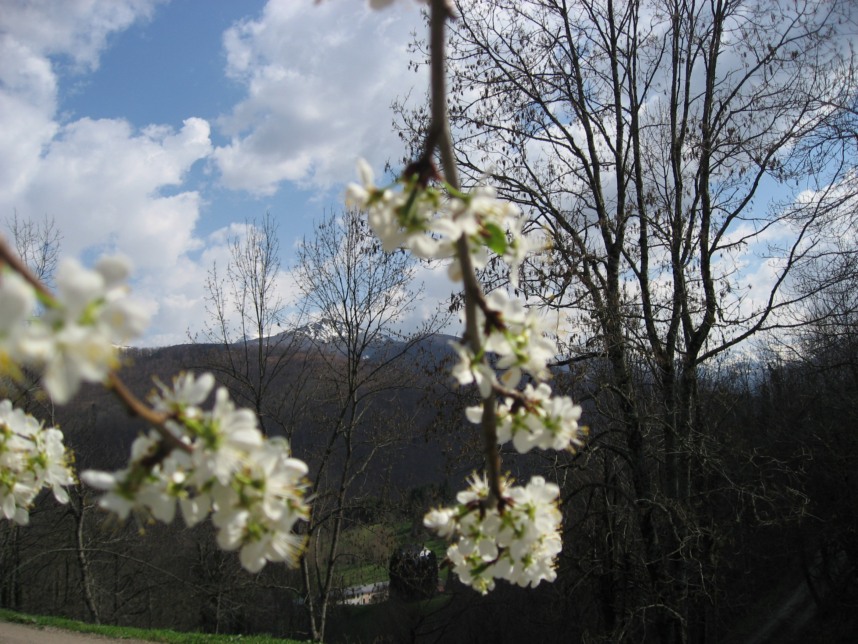 L'annonce du printemps