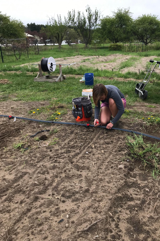 Andi laying irrigation