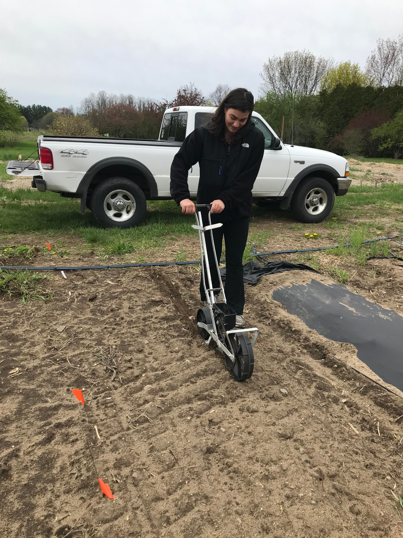 Giovanna planting peas