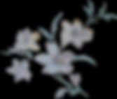 strauss 2 Logo.png