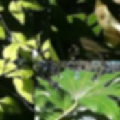 Screen Shot 2020-04-12 at 23.12.05.png