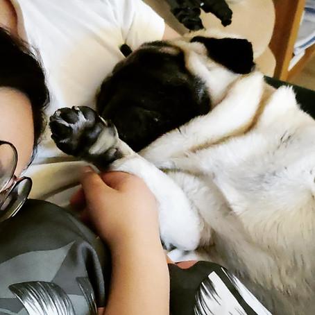 Brain Stimulation Activities + DIY | Bogart the Pug Series #4