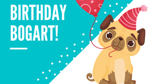 June 19, 2021 | Bogart the Pug's 5th Birthday | Brunch Party at the Park