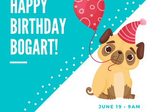 June 19, 2021   Bogart the Pug's 5th Birthday   Brunch Party at the Park
