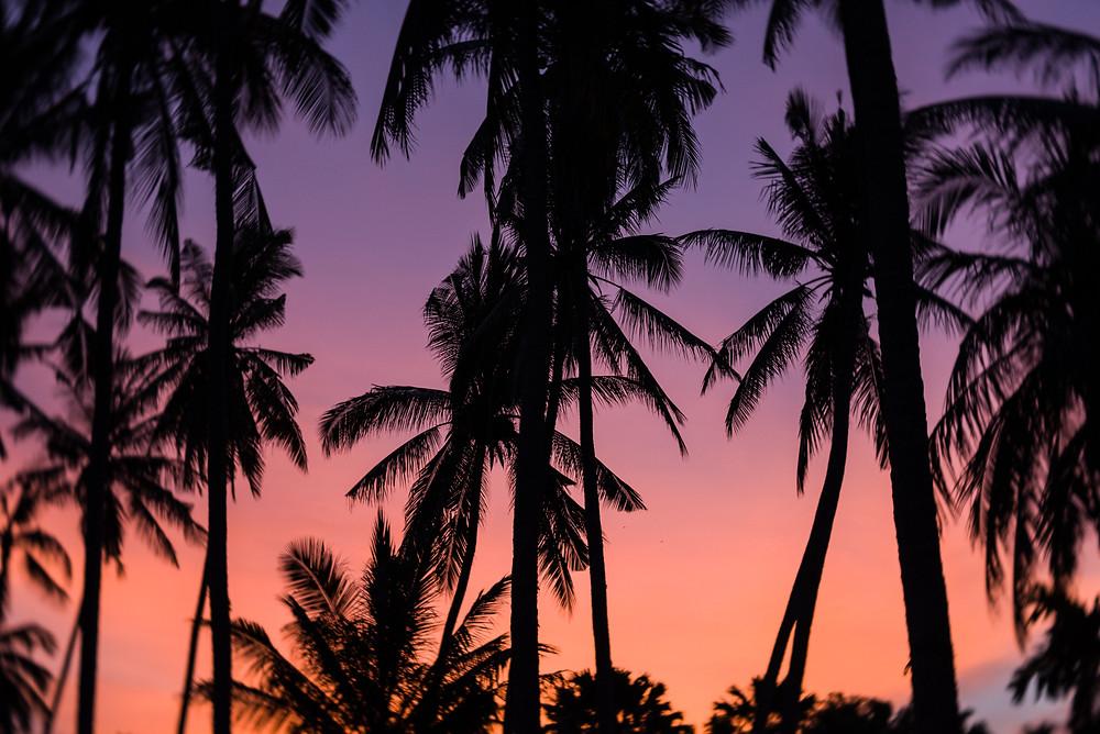 Bali pálmafák