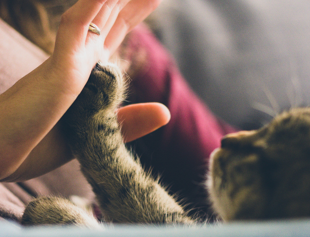 cat high fiving for awesome useful content