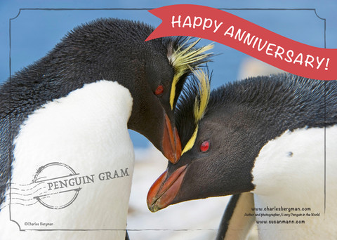 Penguin Gram - Happy Anniversary