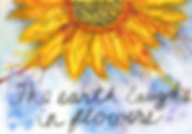 Sunflower_HQ-WEB.jpg