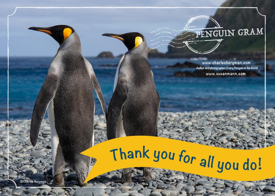 Penguin Gram - Thank You