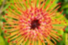 3-COACH-Protea--Maui-2018-1.jpg