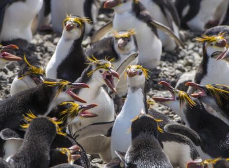 Talking to Penguins